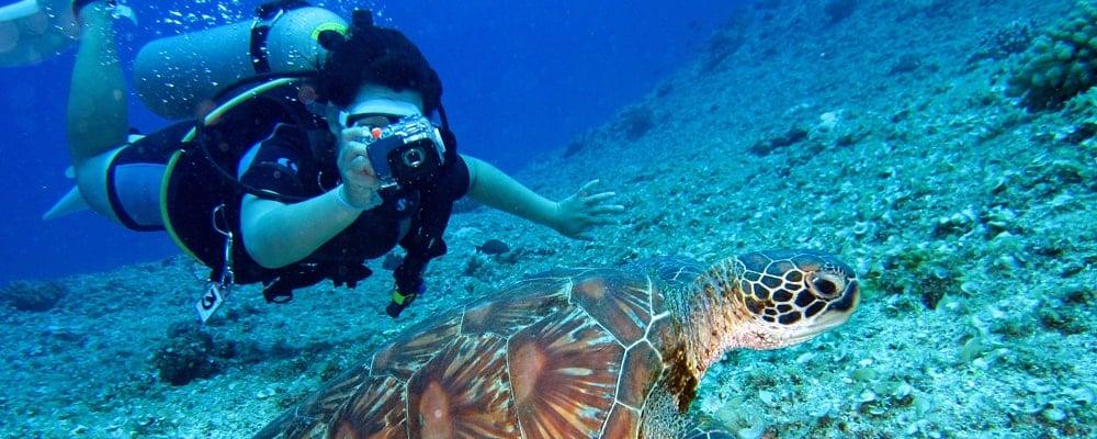 Mergulhador no Rio de Janeiro com Animais aquáticos
