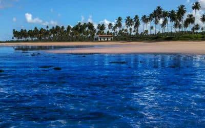 Locação de van para visitar a Praia do Francês